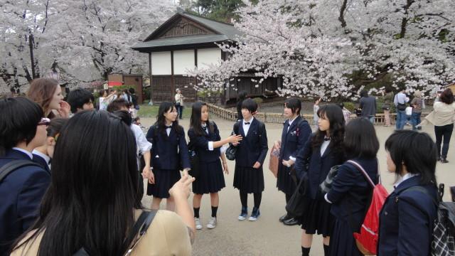 японские студенты сакура